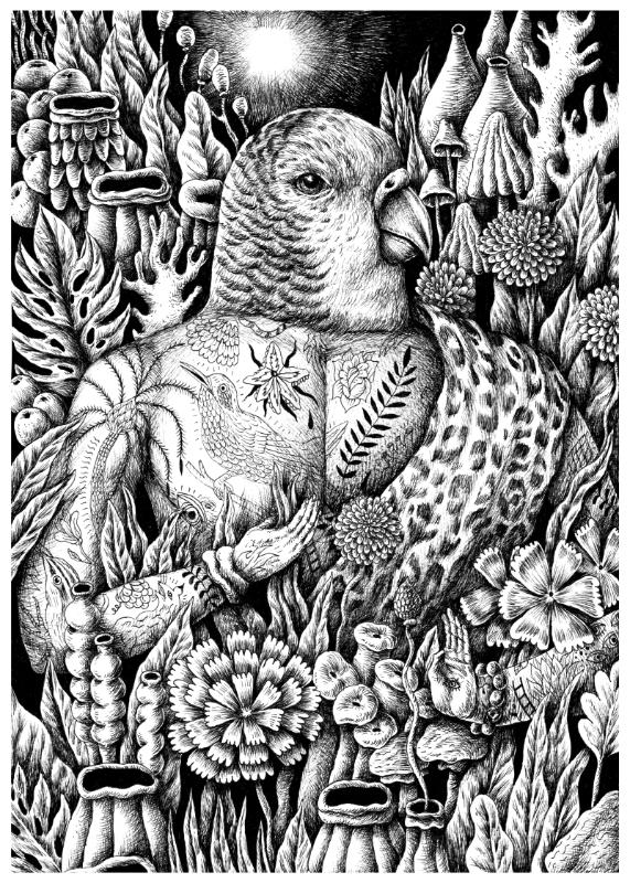 Saddo - The Bird King